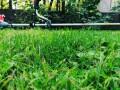 usluzno-kosenje-trave-odrzavanje-zelenih-povrsina-small-2