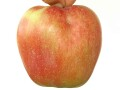 kvalitetne-sertifikovane-vocne-sadnice-iz-rasadnika-antic-small-2