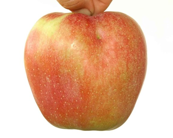 kvalitetne-sertifikovane-vocne-sadnice-iz-rasadnika-antic-big-2