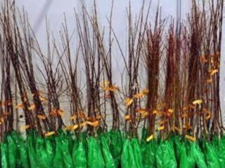Razne sadnice iz rasadnika NASTIC