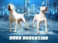 dogo-argentino-stenci-small-0