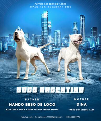 dogo-argentino-stenci-big-0