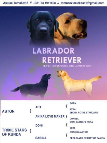 u-ponudi-stenci-labrador-retrivera-big-0