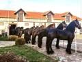 frizijski-konji-prodaja-small-0