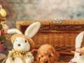u-ponudi-aprikot-toy-pudla-i-crna-patuljasta-pudla-small-0