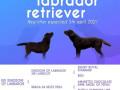 u-ponudi-stenci-labrador-retrivera-small-0