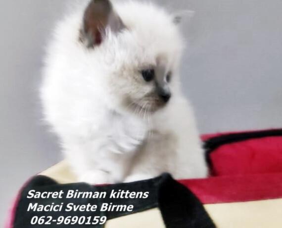 svete-birme-originalni-macici-big-1