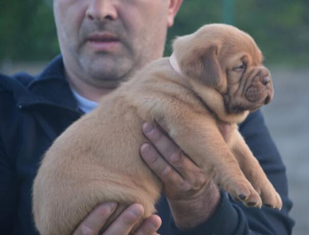 zenka-bordoske-doge-big-2