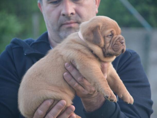 zenka-bordoske-doge-big-1