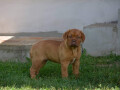 stene-bordoske-doge-small-4