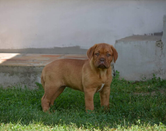 stene-bordoske-doge-big-4