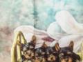 jorksirski-terijer-kvalitetni-stenci-small-4