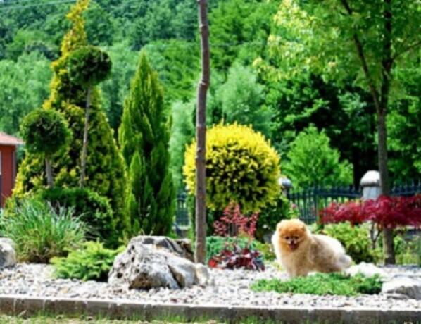 beautiful-puppies-boo-pomerance-big-2