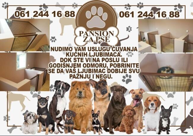 pansion-za-pse-big-0