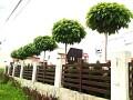 prodaja-sadnica-i-tepih-trave-small-4
