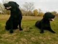 dve-zenke-labradora-small-0