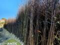 sadnice-voca-svih-vrsta-dostava-brzom-postom-small-1