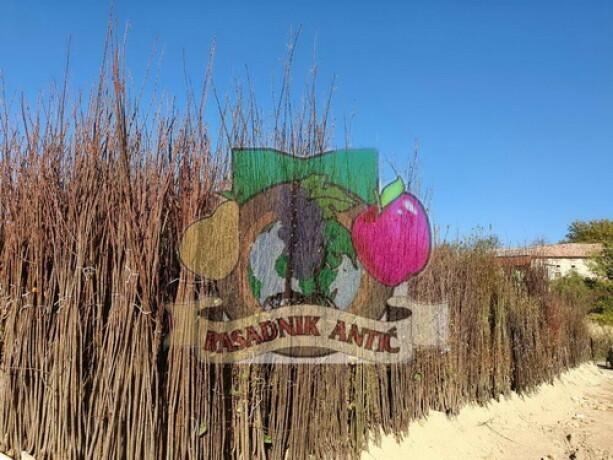 sadnice-voca-svih-vrsta-dostava-brzom-postom-big-3