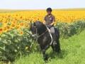 prodaja-frizijskih-konja-small-1
