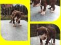 pitbull-stenci-small-0